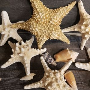 Starfish and Sea Shells Nautical Home Decor